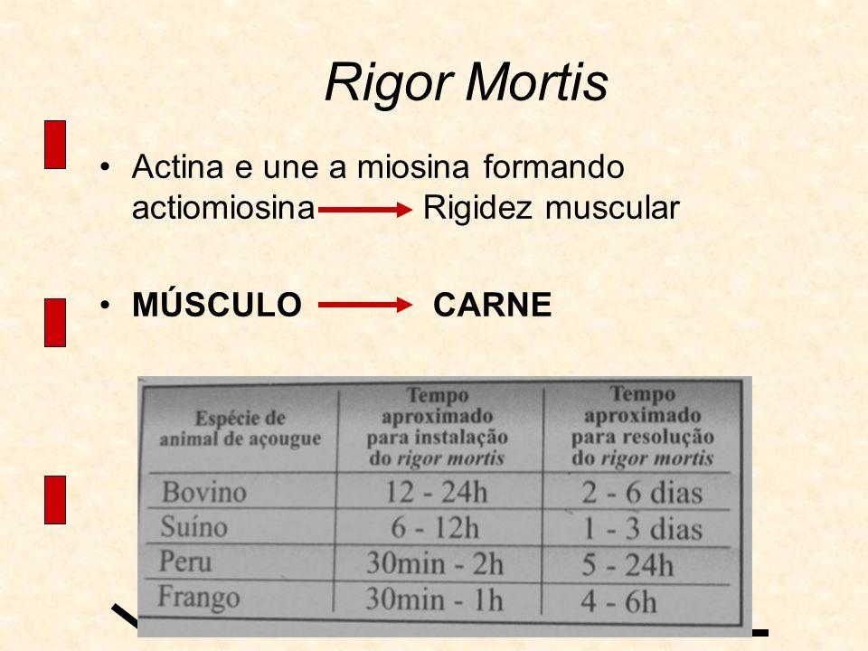 Rigor Mortis Actina e une a miosina formando actiomiosina Rigidez muscular MÚSCULO CARNE