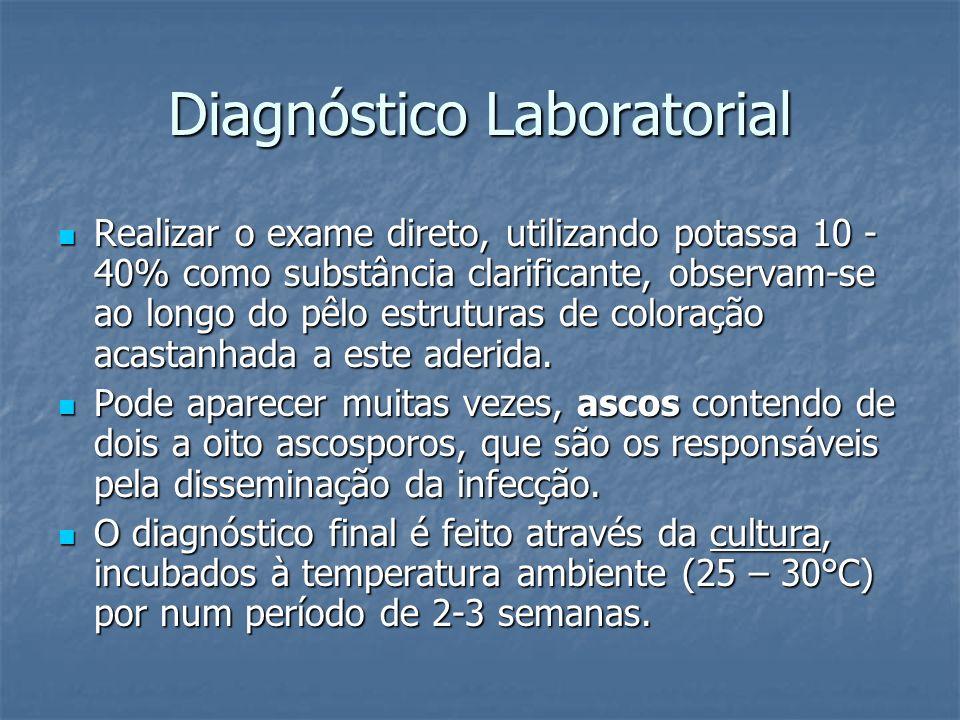 Diagnóstico Laboratorial Realizar o exame direto, utilizando potassa 10 - 40% como substância clarificante, observam-se ao longo do pêlo estruturas de