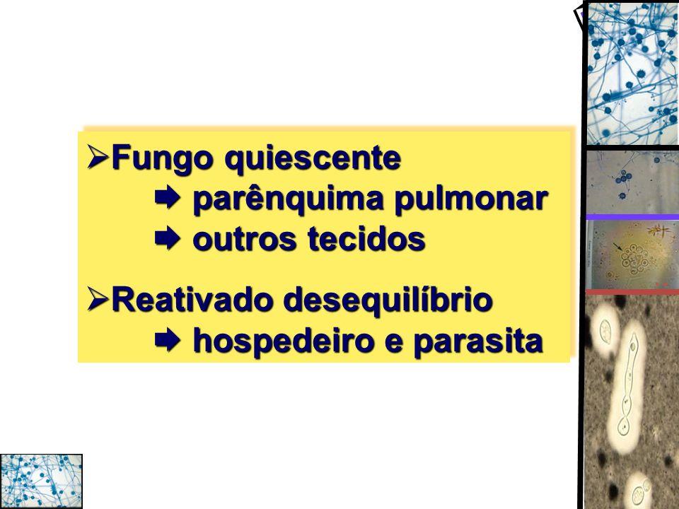 Fungo quiescente parênquima pulmonar outros tecidos Fungo quiescente parênquima pulmonar outros tecidos Reativado desequilíbrio hospedeiro e parasita