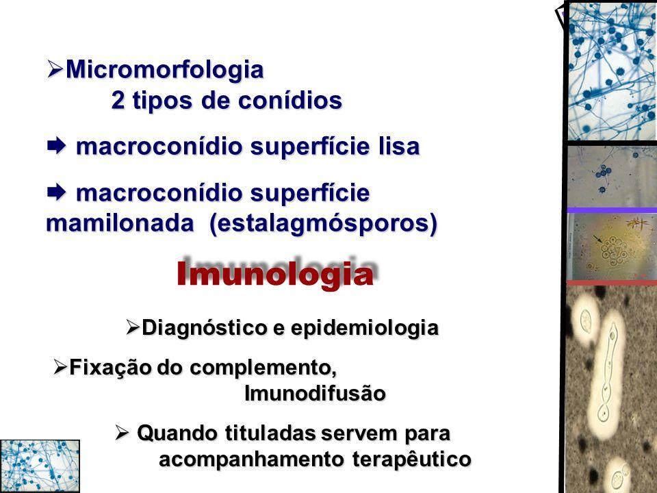 Micromorfologia 2 tipos de conídios Micromorfologia 2 tipos de conídios macroconídio superfície lisa macroconídio superfície lisa macroconídio superfí