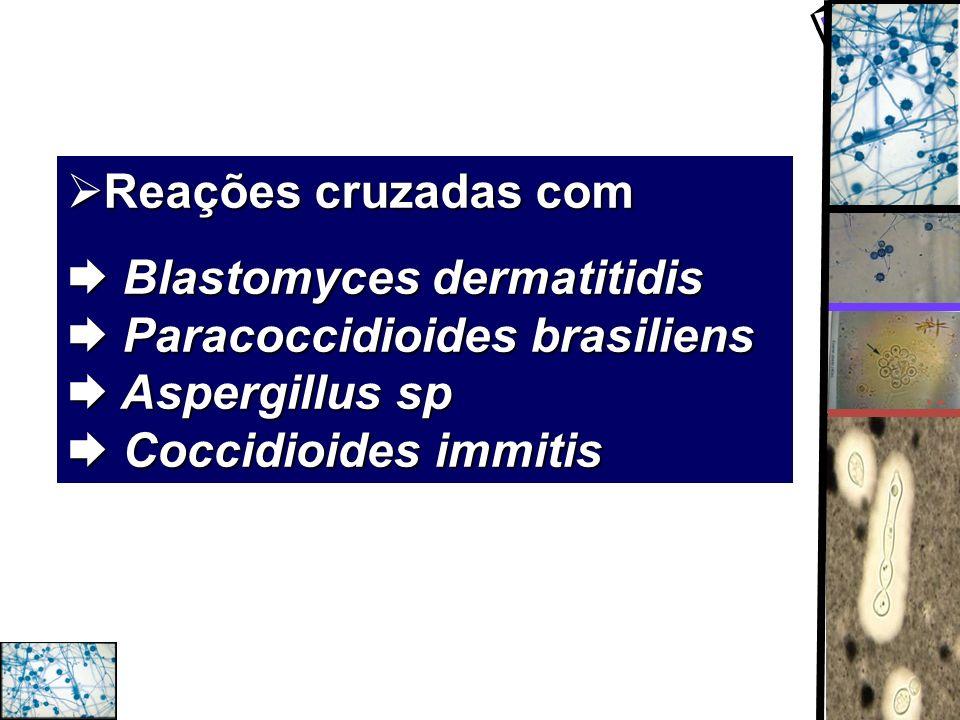 Reações cruzadas com Reações cruzadas com Blastomyces dermatitidis Paracoccidioides brasiliens Aspergillus sp Coccidioides immitis Blastomyces dermati