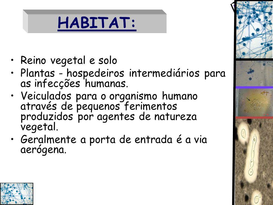 HABITAT: Reino vegetal e solo Plantas - hospedeiros intermediários para as infecções humanas. Veiculados para o organismo humano através de pequenos f