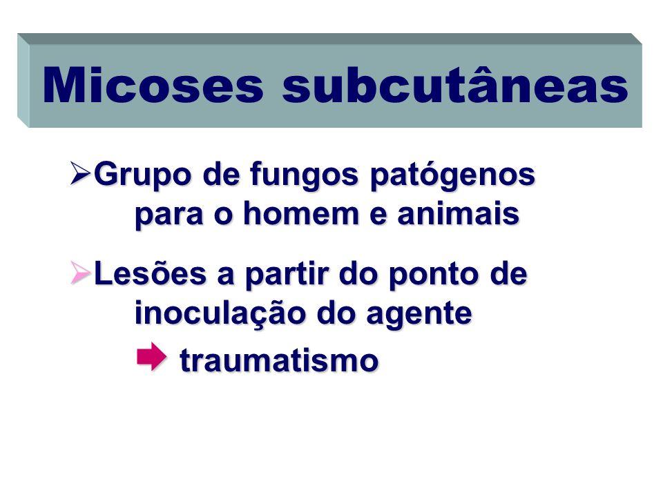 Micoses subcutâneas Grupo de fungos patógenos para o homem e animais Grupo de fungos patógenos para o homem e animais Lesões a partir do ponto de inoc