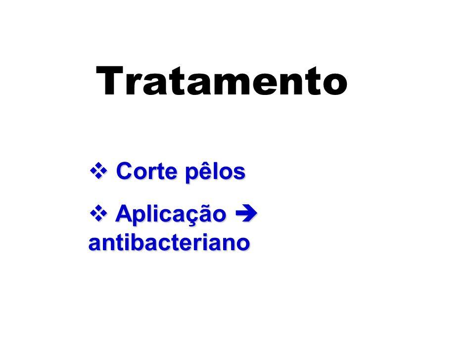 Tratamento Corte pêlos Corte pêlos Aplicação antibacteriano Aplicação antibacteriano