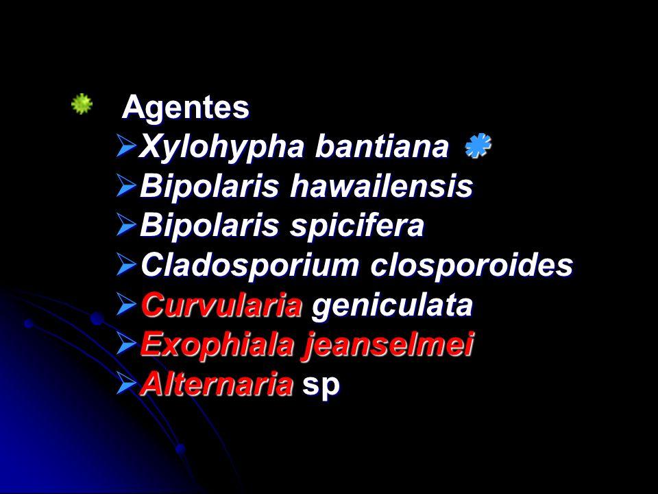 Agentes Agentes Xylohypha bantiana Xylohypha bantiana Bipolaris hawailensis Bipolaris hawailensis Bipolaris spicifera Bipolaris spicifera Cladosporium