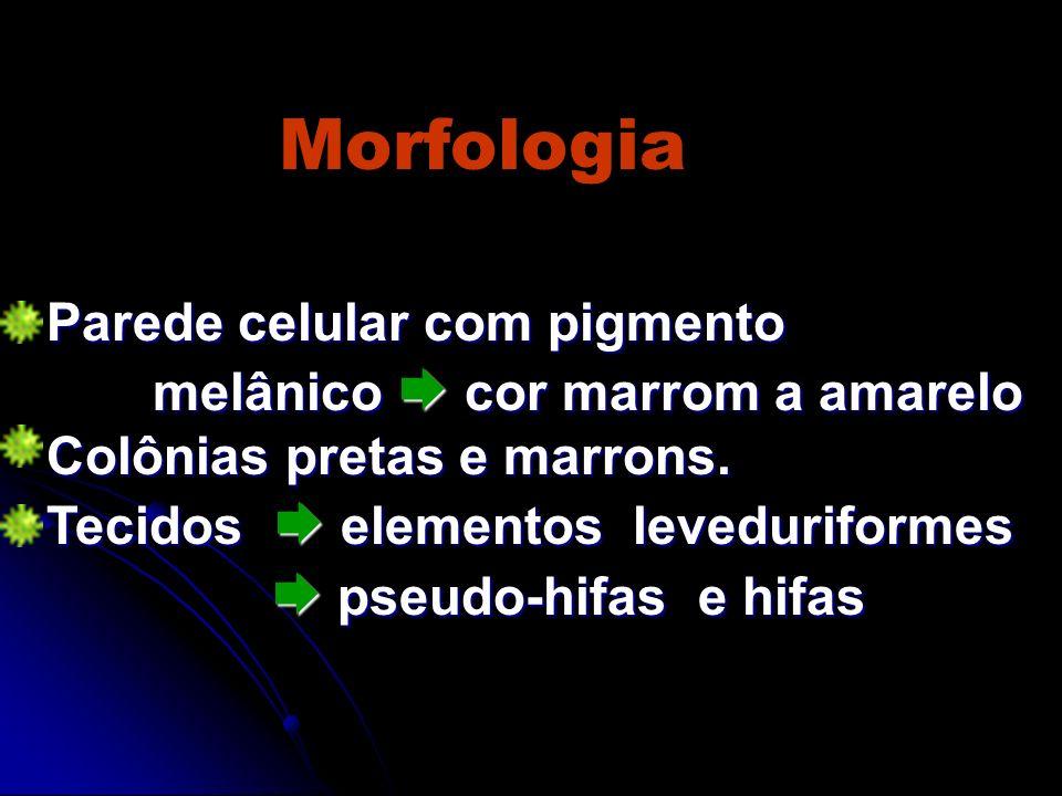 Morfologia Parede celular com pigmento melânico cor marrom a amarelo Colônias pretas e marrons. Tecidos elementos leveduriformes pseudo-hifas e hifas
