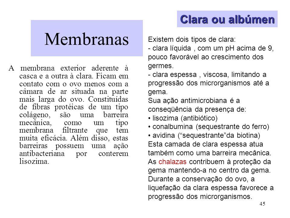 45 Membranas A membrana exterior aderente à casca e a outra à clara. Ficam em contato com o ovo menos com a câmara de ar situada na parte mais larga d