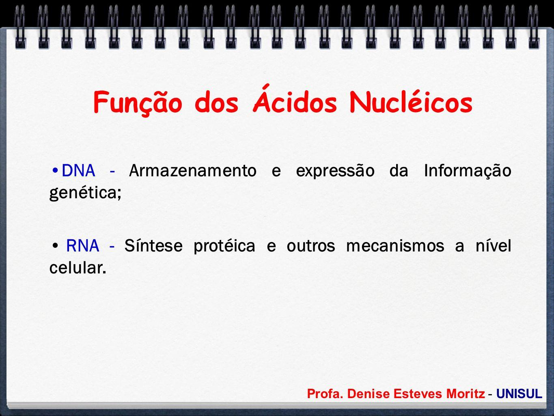 Profa. Denise Esteves Moritz - UNISUL Função dos Ácidos Nucléicos DNA - Armazenamento e expressão da Informação genética; RNA - Síntese protéica e out