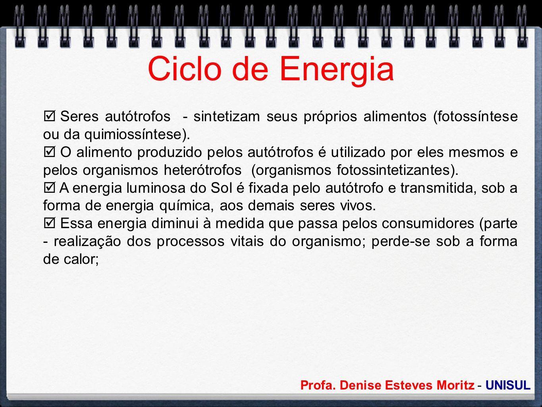 Profa. Denise Esteves Moritz - UNISUL Ciclo de Energia Seres autótrofos - sintetizam seus próprios alimentos (fotossíntese ou da quimiossíntese). O al