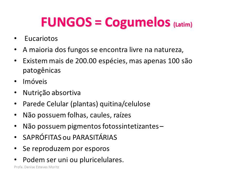 Profa. Denise Esteves Moritz FUNGOS = Cogumelos (Latim) Eucariotos A maioria dos fungos se encontra livre na natureza, Existem mais de 200.00 espécies