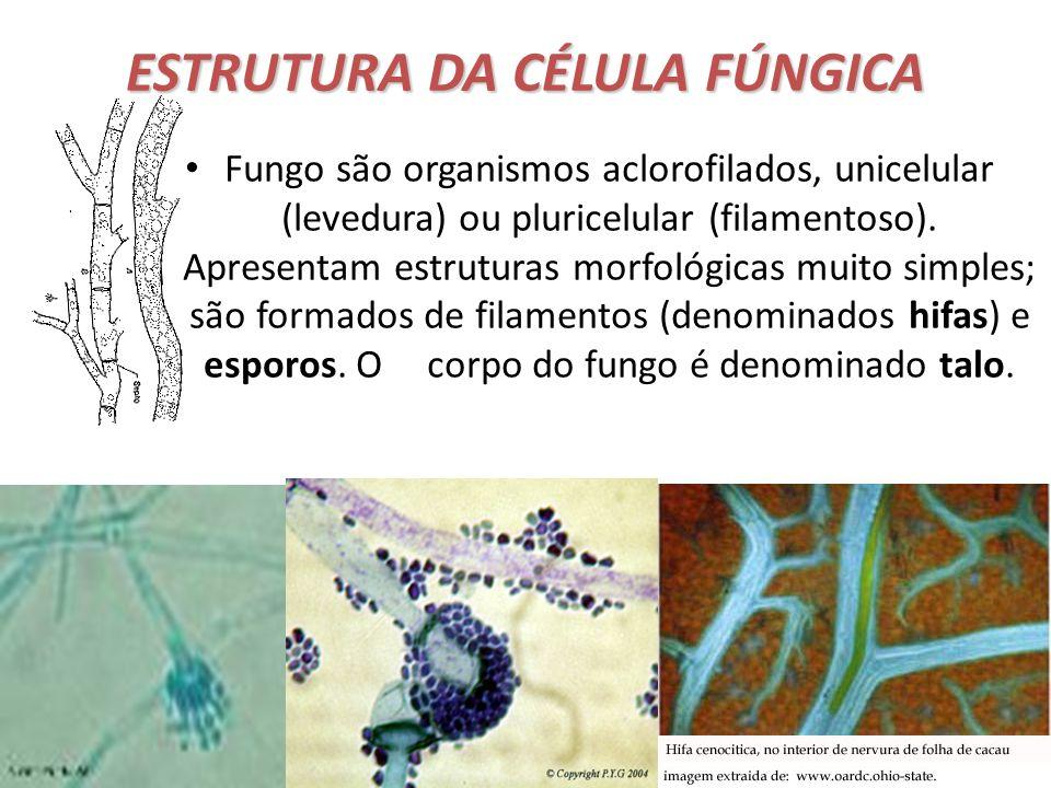 Profa. Denise Esteves Moritz ESTRUTURA DA CÉLULA FÚNGICA Fungo são organismos aclorofilados, unicelular (levedura) ou pluricelular (filamentoso). Apre