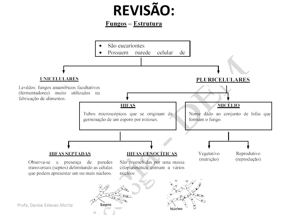 Profa. Denise Esteves Moritz REVISÃO: