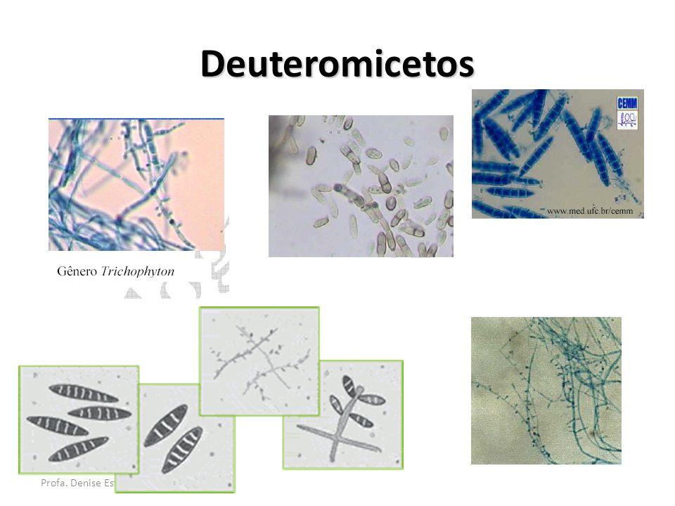 Profa. Denise Esteves Moritz Deuteromicetos