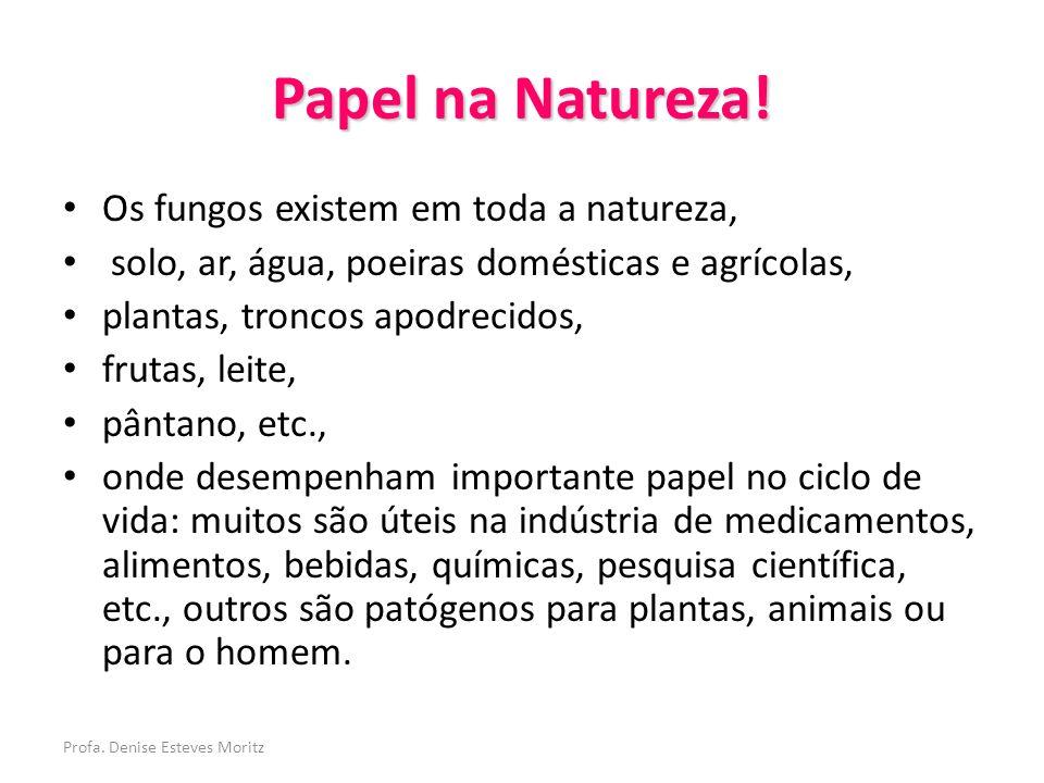Profa. Denise Esteves Moritz Papel na Natureza! Os fungos existem em toda a natureza, solo, ar, água, poeiras domésticas e agrícolas, plantas, troncos