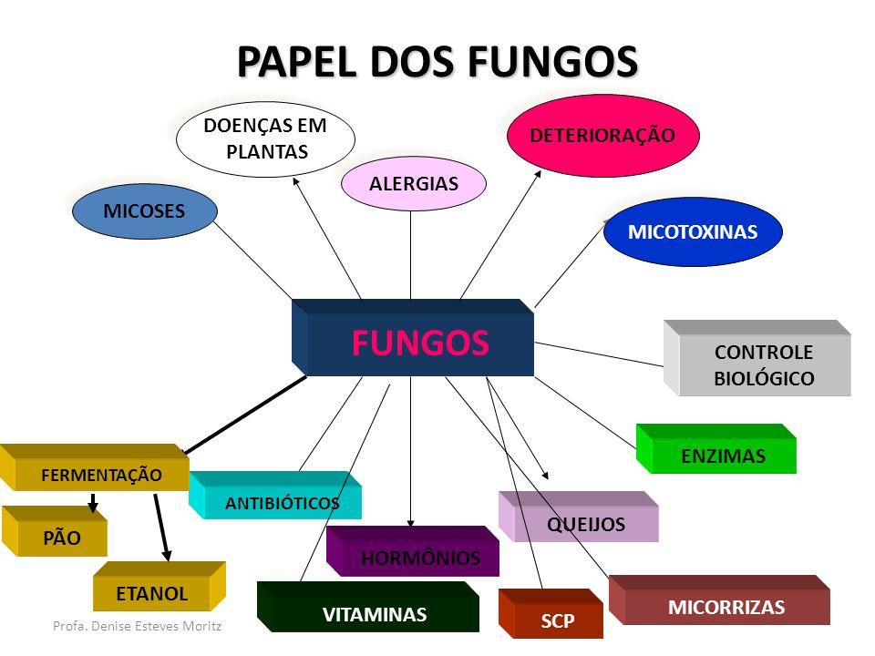 Profa. Denise Esteves Moritz PAPEL DOS FUNGOS FUNGOS ANTIBIÓTICOS HORMÔNIOS QUEIJOS ENZIMAS PÃO ETANOL FERMENTAÇÃO CONTROLE BIOLÓGICO MICOSES DOENÇAS