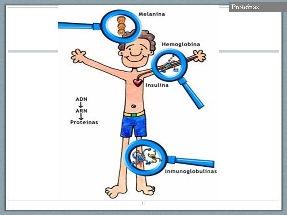 11 Proteínas