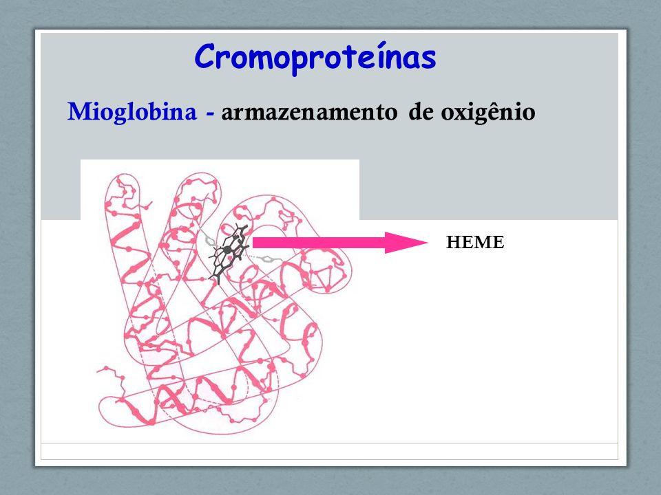 Cromoproteínas Mioglobina - armazenamento de oxigênio HEME