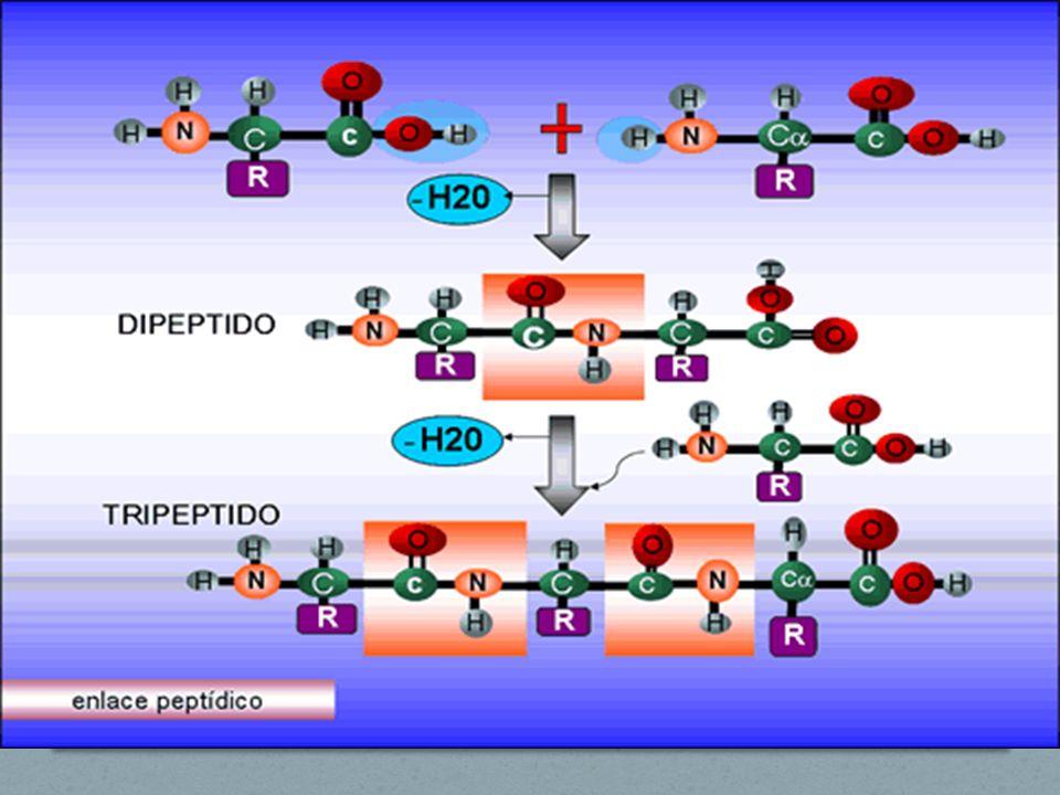 Ocorrência 9 São muitas as fontes, e o número de proteínas existentes na Natureza é praticamente infinito, embora o número de aminoácidos que as constituem seja bastante reduzido, em torno de 20.