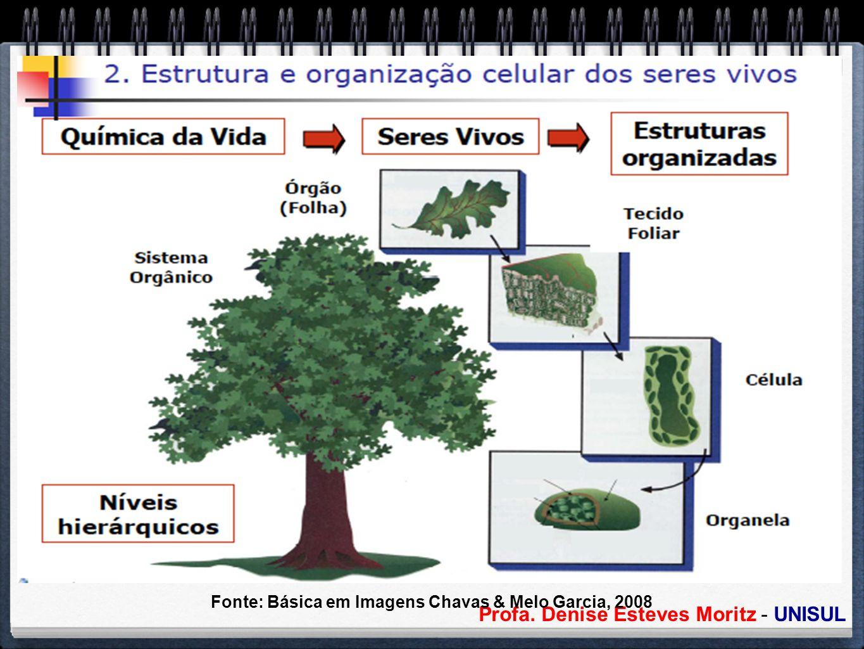 Profa. Denise Esteves Moritz - UNISUL Organização Celular Fonte: Básica em Imagens Chavas & Melo Garcia, 2008