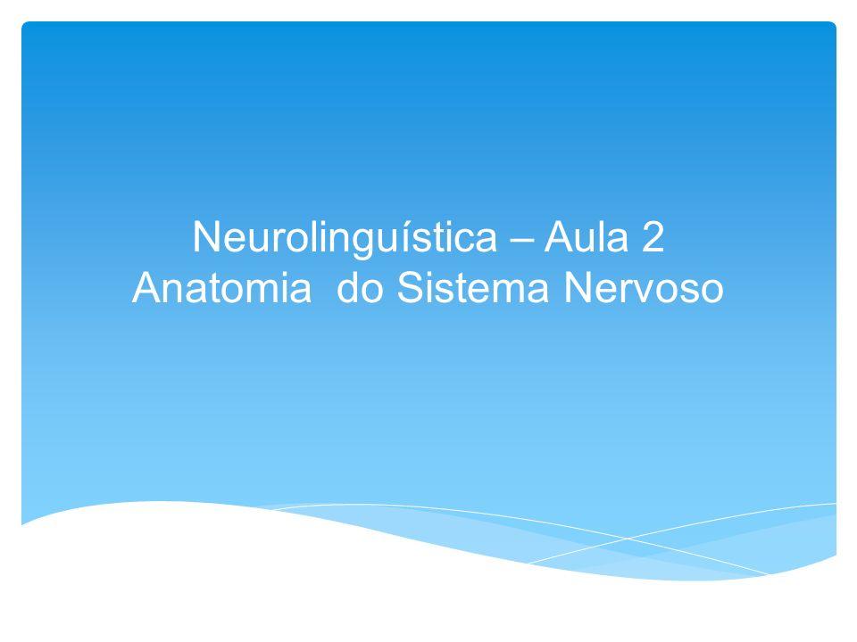 POTENCIAL DE REPOUSO O potencial de repouso de um neurônio caracteriza-se pela diferença de um potencial elétrico entre o meio interno e externo do neurônio.