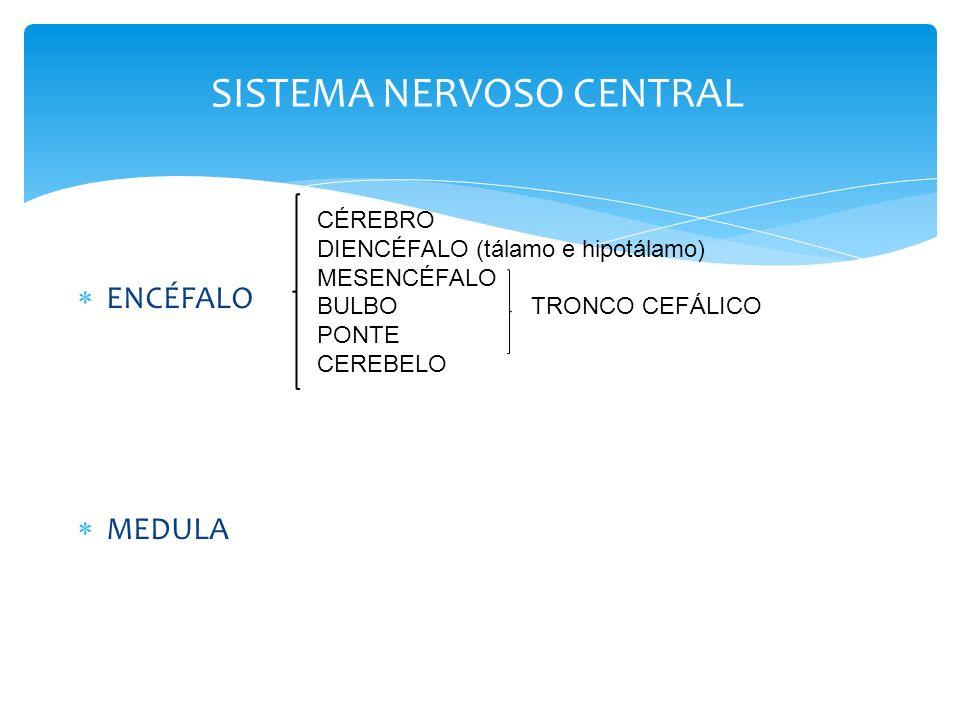 Funções das Partes do Encéfalo Principais divisões do céro Medula espinhal Tronco encefálico Cerebelo Cérebro anterior 1.Diencéfalo - tálamo, hipotálamo 2.Córtex cerebral Principais divisões do cérebro Tronco encefálico Cerebelo Cérebro anterior 1.Diencéfalo - tálamo, hipotálamo 2.Córtex cerebral Tronco encefálico - o tronco encefálico consiste em bulbo, ponte e mesencéfalo; o tronco encefálico controla os reflexos e funções automáticas (frequência cardíaca, pressão arterial), movimentos dos membros e funções viscerais (digestão, micção); Cerebelo - integra informações do sistema vestibular que indicam posição e movimento e utiliza essas informações para coordenar os movimentos dos membros; Hipotálamo e glândula pituitária - controlam as funções viscerais, temperatura corporal e respostas de comportamento, como alimentar-se, beber, respostas sexuais, agressão e prazer; Cérebro superior, também chamado de córtex cerebral ou apenas córtex- o cérebro consiste no córtex, grandes tratos fibrosos (corpo caloso) e algumas estruturas mais profundas (gânglio basal, amígdala, hipocampo); integra informações de todos os órgãos dos sentidos, inicia as funções motoras, controla as emoções e realiza os processos da memória e do pensamento, expressão de emoções e pensamentos são mais predominantes em mamíferos superiores.