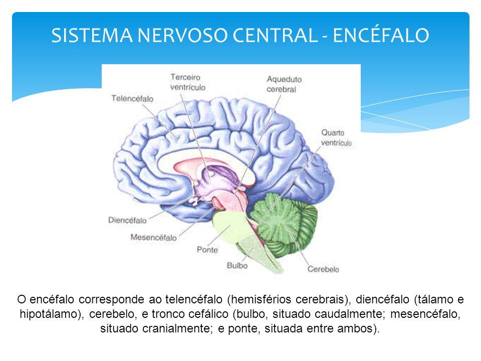 Endorfinas e encefalinas: bloqueiam a dor, agindo naturalmente no corpo como analgésicos..