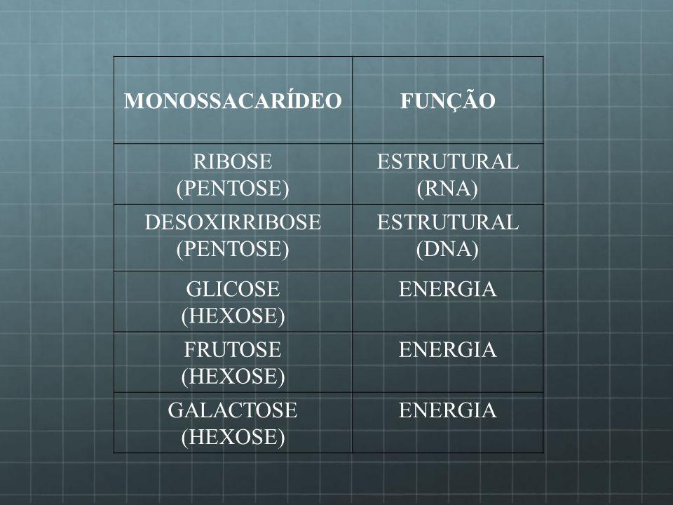 MONOSSACARÍDEOFUNÇÃO RIBOSE (PENTOSE) ESTRUTURAL (RNA) DESOXIRRIBOSE (PENTOSE) ESTRUTURAL (DNA) GLICOSE (HEXOSE) ENERGIA FRUTOSE (HEXOSE) ENERGIA GALA