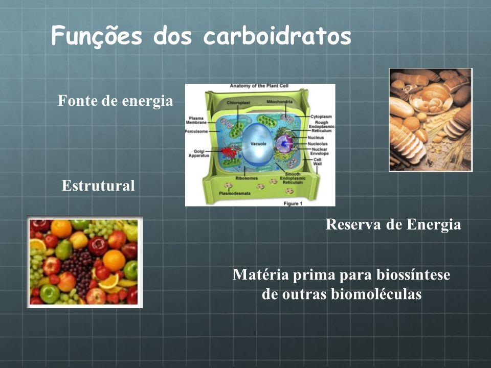 Funções dos carboidratos Fonte de energia Estrutural Reserva de Energia Matéria prima para biossíntese de outras biomoléculas