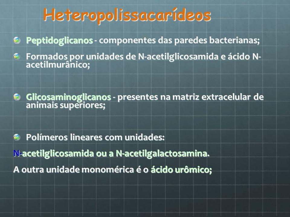 Heteropolissacarídeos Peptidoglicanos - componentes das paredes bacterianas; Formados por unidades de N-acetilglicosamida e ácido N- acetilmurânico; G