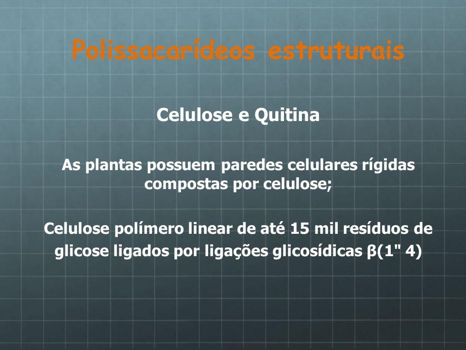 Polissacarídeos estruturais Celulose e Quitina As plantas possuem paredes celulares rígidas compostas por celulose; Celulose polímero linear de até 15