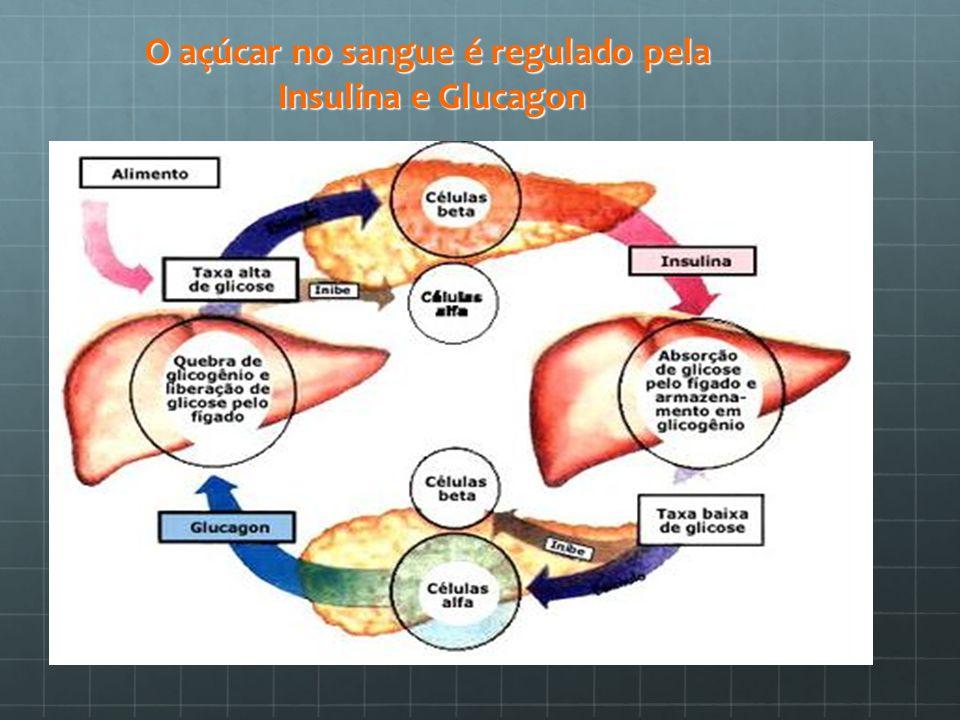 O açúcar no sangue é regulado pela Insulina e Glucagon
