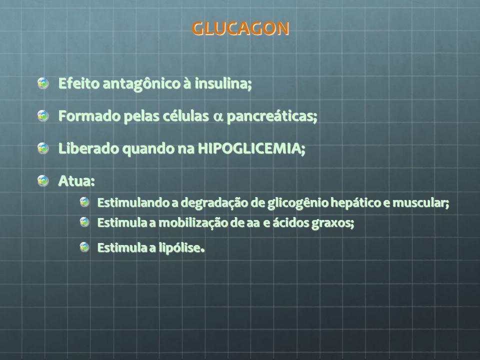 GLUCAGON Efeito antagônico à insulina; Formado pelas células pancreáticas; Liberado quando na HIPOGLICEMIA; Atua: Estimulando a degradação de glicogên