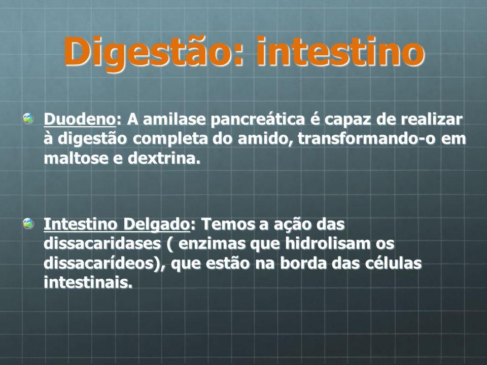 Digestão: intestino Duodeno: A amilase pancreática é capaz de realizar à digestão completa do amido, transformando-o em maltose e dextrina. Intestino