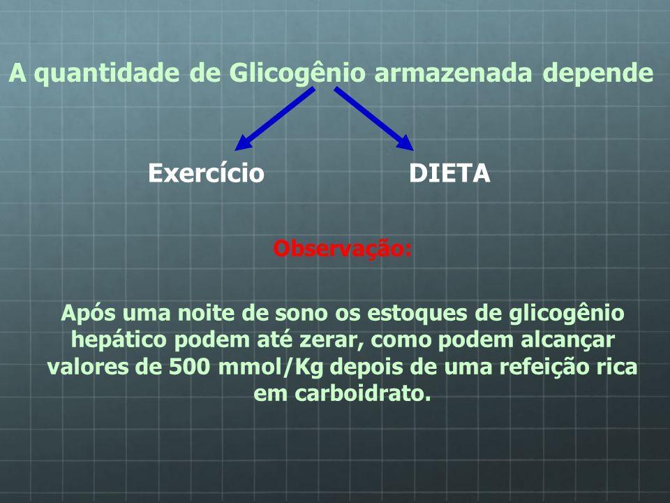 A quantidade de Glicogênio armazenada depende Exercício DIETA Observação: Após uma noite de sono os estoques de glicogênio hepático podem até zerar, c