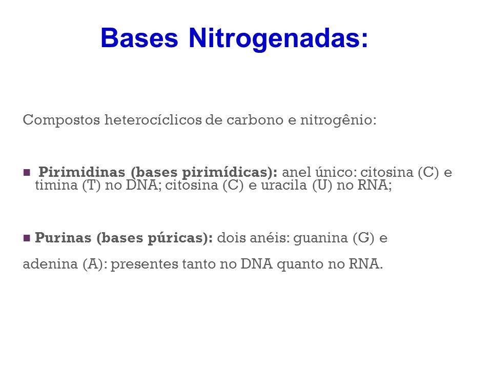Compostos heterocíclicos de carbono e nitrogênio: Pirimidinas (bases pirimídicas): anel único: citosina (C) e timina (T) no DNA; citosina (C) e uracil