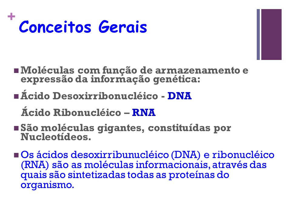 + Conceitos Gerais Moléculas com função de armazenamento e expressão da informação genética: Ácido Desoxirribonucléico - DNA Ácido Ribonucléico – RNA