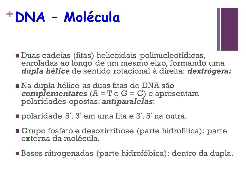 + DNA – Molécula Duas cadeias (fitas) helicoidais polinucleotídicas, enroladas ao longo de um mesmo eixo, formando uma dupla hélice de sentido rotacio
