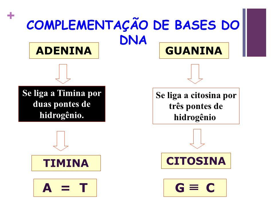 + COMPLEMENTAÇÃO DE BASES DO DNA ADENINA TIMINA Se liga a Timina por duas pontes de hidrogênio. A = T GUANINA CITOSINA Se liga a citosina por três pon
