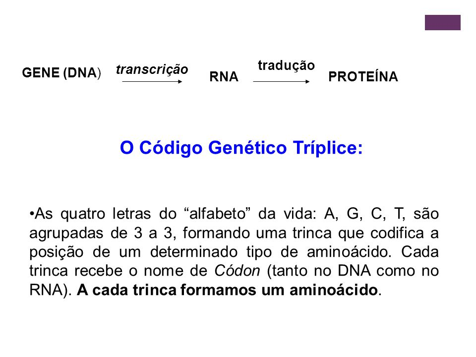 GENE (DNA) RNA PROTEÍNA transcrição tradução O Código Genético Tríplice: As quatro letras do alfabeto da vida: A, G, C, T, são agrupadas de 3 a 3, for