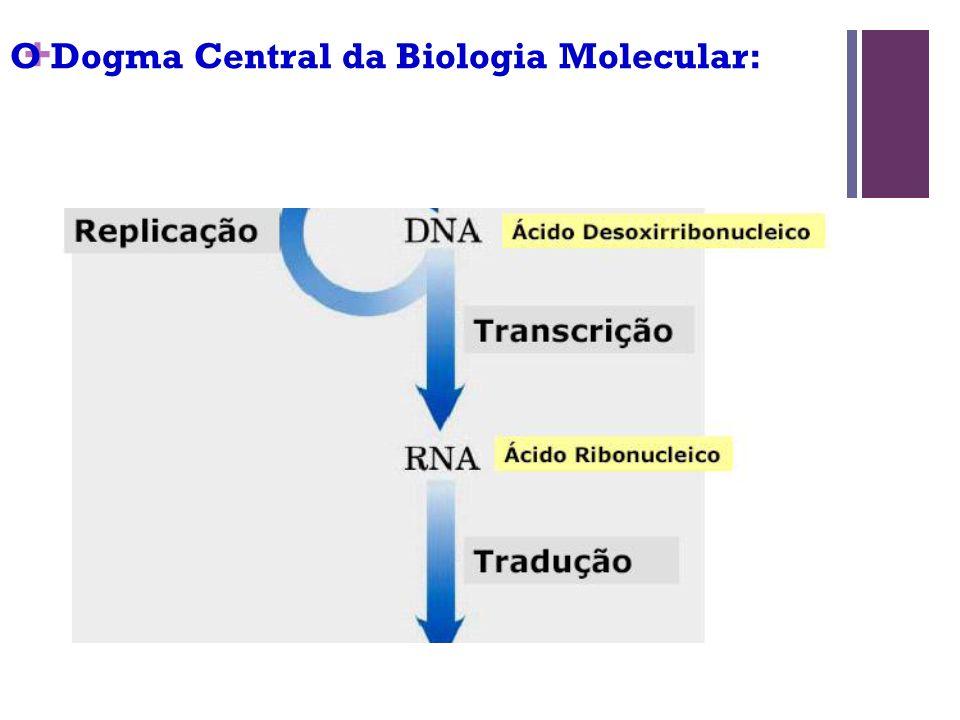 + O Dogma Central da Biologia Molecular: