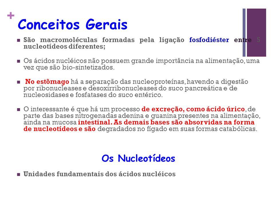 + Conceitos Gerais São macromoléculas formadas pela ligação fosfodiéster entre 5 nucleotídeos diferentes; Os ácidos nucléicos não possuem grande impor