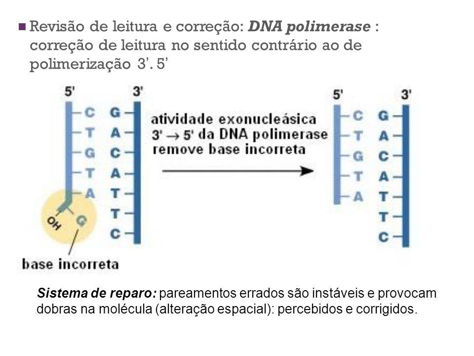 Revisão de leitura e correção: DNA polimerase : correção de leitura no sentido contrário ao de polimerização 3. 5 Sistema de reparo: pareamentos errad