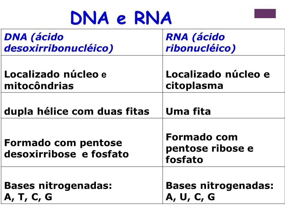 DNA (ácido desoxirribonucléico) RNA (ácido ribonucléico) Localizado núcleo e mitocôndrias Localizado núcleo e citoplasma dupla hélice com duas fitasUm