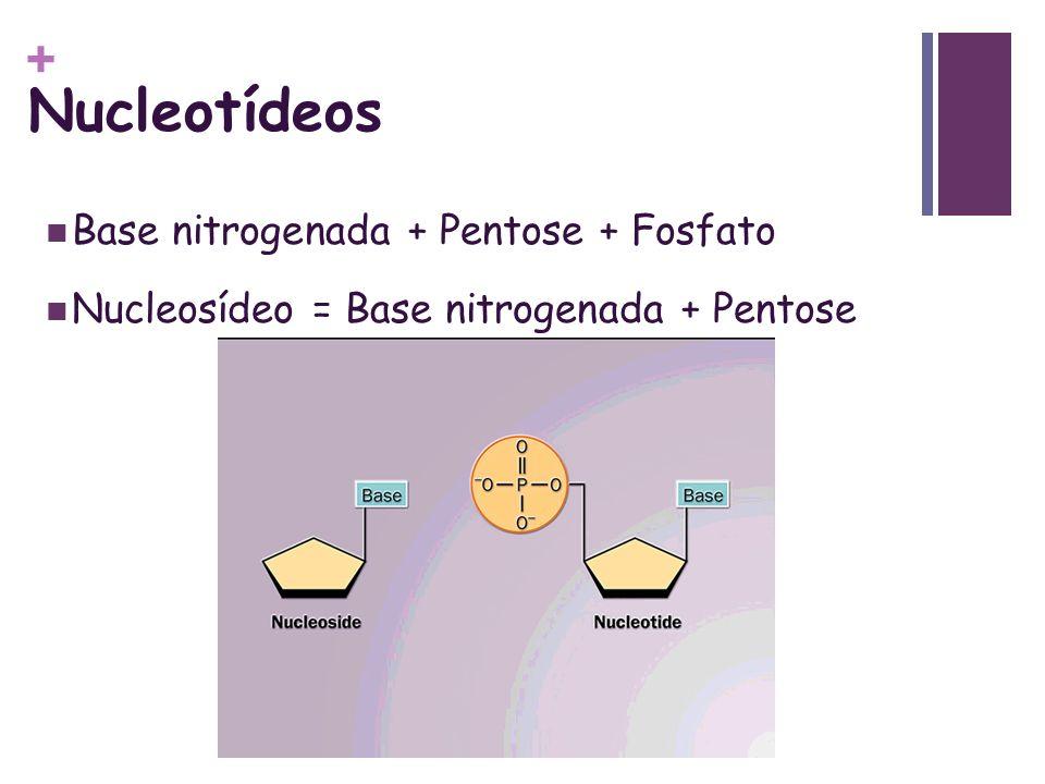 + Nucleotídeos Base nitrogenada + Pentose + Fosfato Nucleosídeo = Base nitrogenada + Pentose