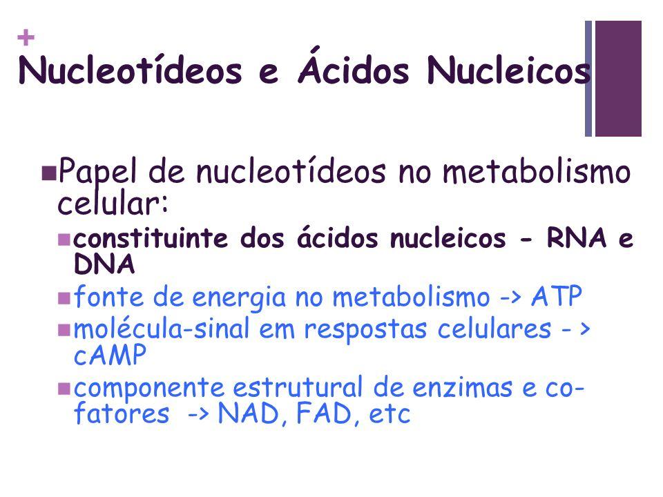 + Nucleotídeos e Ácidos Nucleicos Papel de nucleotídeos no metabolismo celular: constituinte dos ácidos nucleicos - RNA e DNA fonte de energia no meta