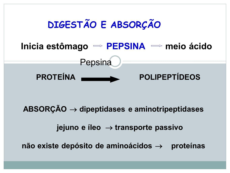 DIGESTÃO E ABSORÇÃO Inicia estômago PEPSINA meio ácido PROTEÍNA POLIPEPTÍDEOS ABSORÇÃO dipeptidases e aminotripeptidases jejuno e íleo transporte passivo não existe depósito de aminoácidos proteínas Pepsina
