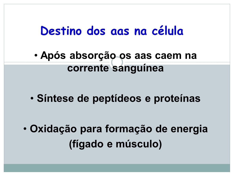 Destino dos aas na célula Após absorção os aas caem na corrente sanguínea Síntese de peptídeos e proteínas Oxidação para formação de energia (fígado e músculo)