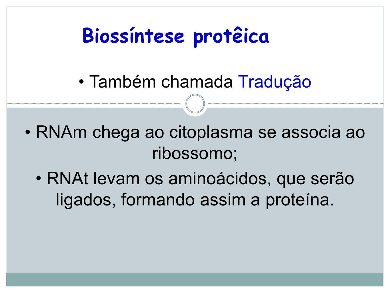 Biossíntese protêica Também chamada Tradução RNAm chega ao citoplasma se associa ao ribossomo; RNAt levam os aminoácidos, que serão ligados, formando assim a proteína.