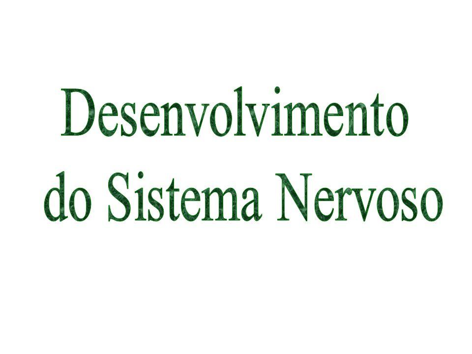 Sistema Nervoso Sistema Nervoso Central (SNC) – Encéfalo e Medula Espinhal Sistema Nervoso Periférico (SNP) – Neurônios situados fora do SNC e os nervos cranianos e espinhais que ligam o encéfalo e a medula espinhal com as estruturas periféricas.