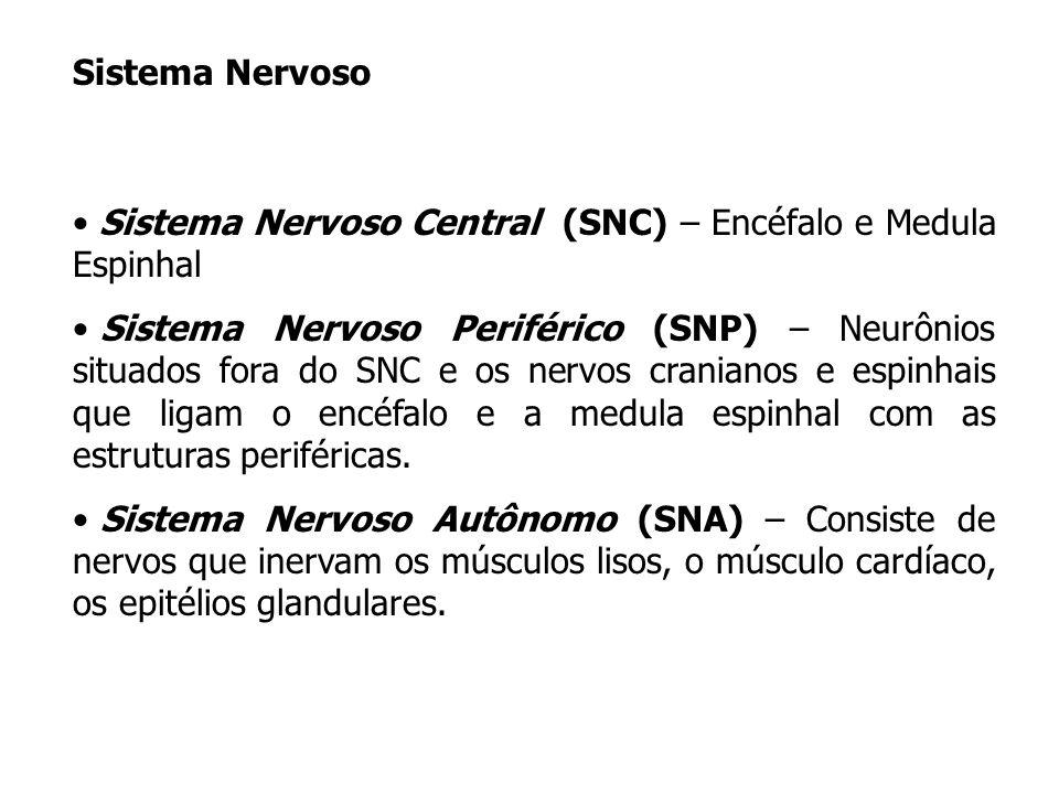 Sistema Nervoso Sistema Nervoso Central (SNC) – Encéfalo e Medula Espinhal Sistema Nervoso Periférico (SNP) – Neurônios situados fora do SNC e os nerv